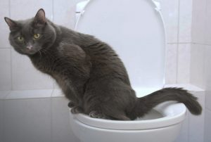 Нолицин при цистите у кошек