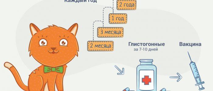 Прививка кота после таблетки от глистов