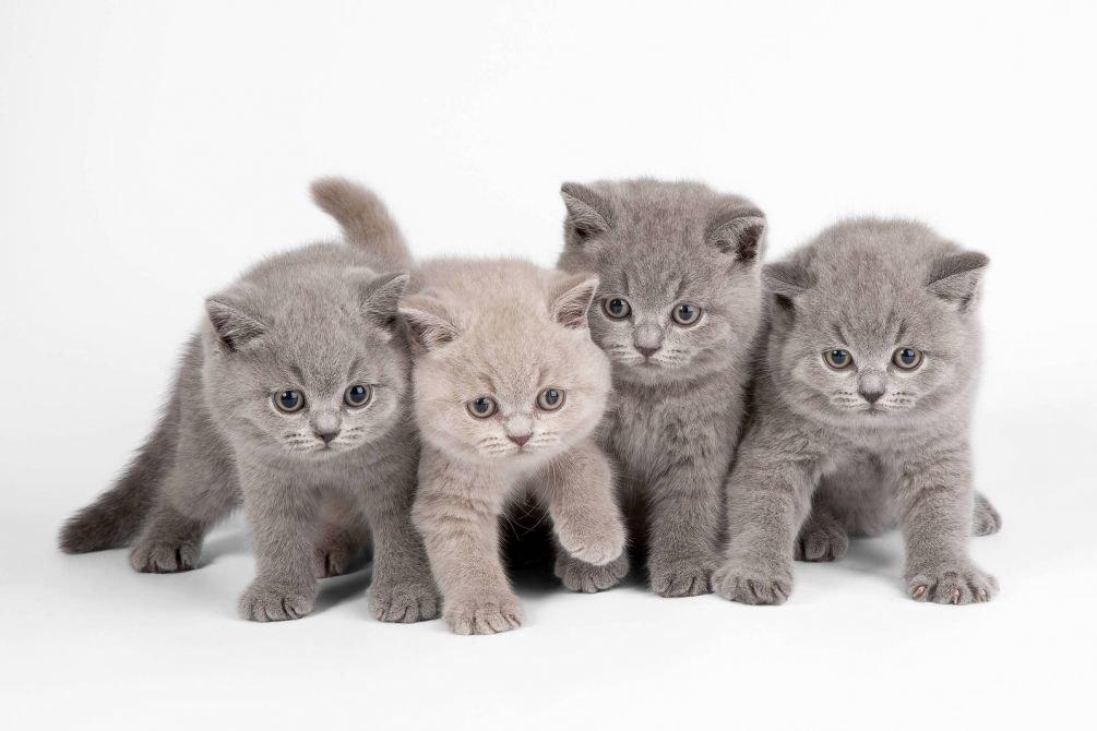 пошло навстречу, покажи фотографии кошек и сколько они стоят примеру