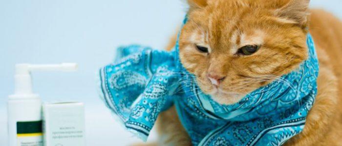 Простуда у котов передается человеку