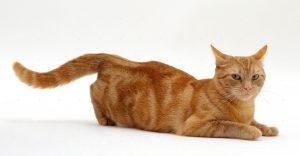 Уколы от гуляния для кошек