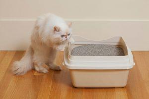 Может ли у кошки быть шизофрения