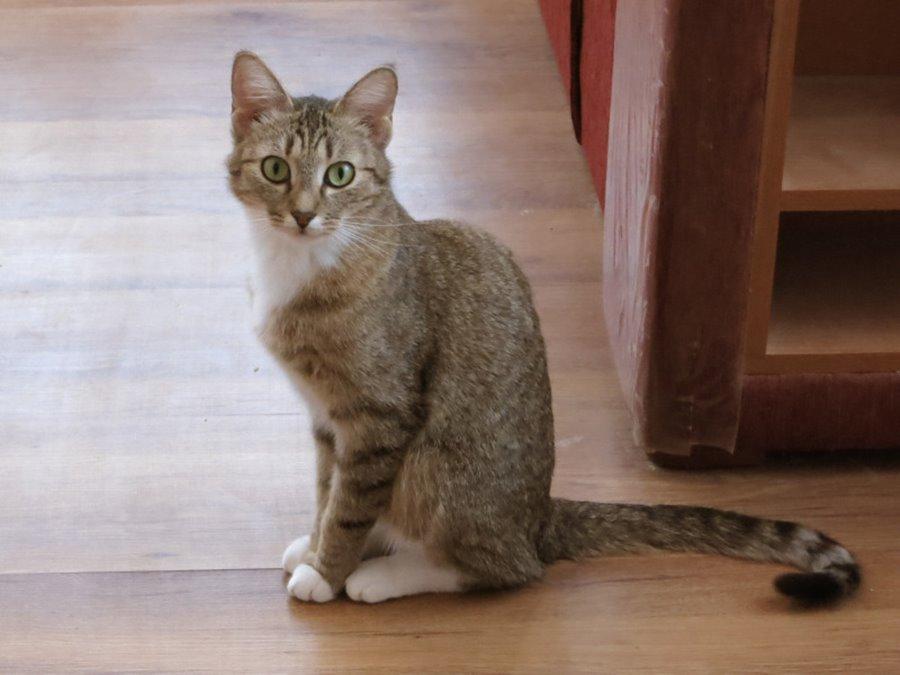 Кошка Сильно Похудела Но Ест Хорошо. Кот плохо ест и худеет: причины, безопасные и опасные симптомы, первая помощь, лечение