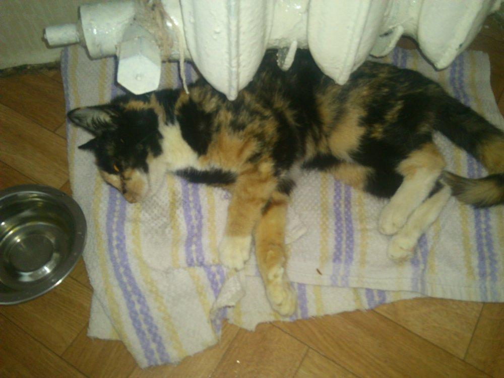 Кошка сильно похудела причина