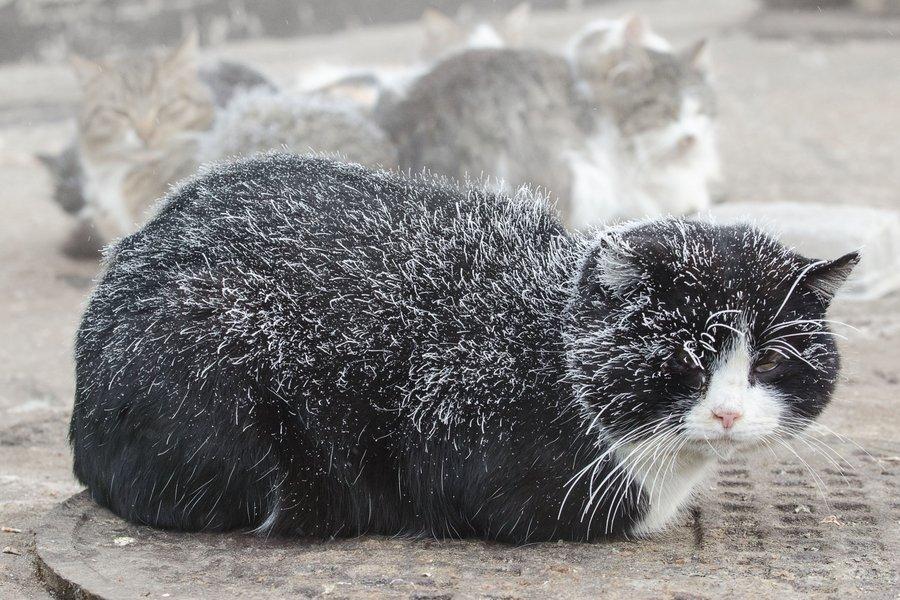 Кошки холод картинки