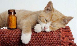 Недержание кала у кошки лечение в домашних условиях