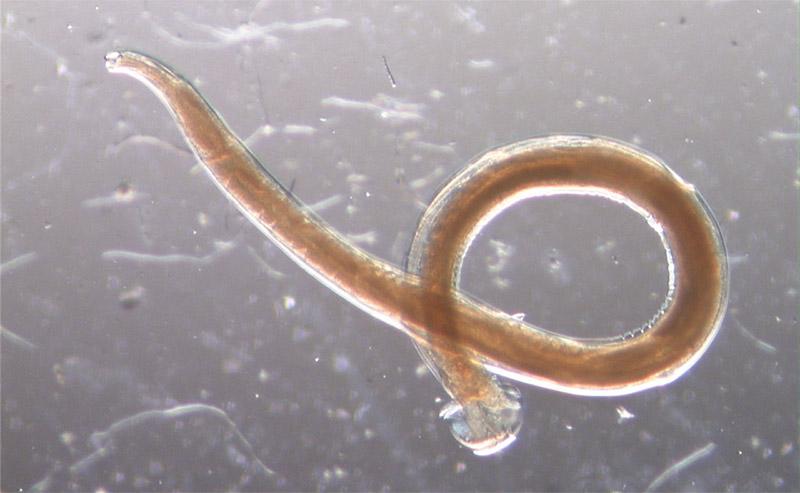 Круглые черви красивые картинки, прикольного