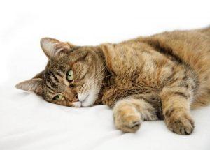 Недержание кала у кошки лечение в домашних условиях thumbnail