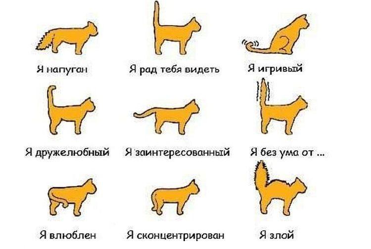 Повадки кошек и их значение в картинках