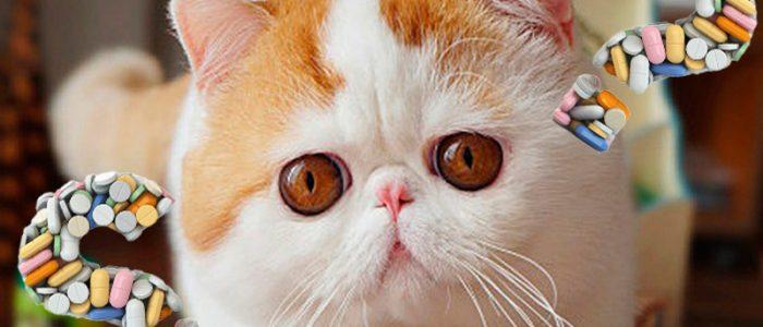 Глазные капли для кошек от аллергии