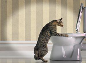 Воспаление желудка у кошки лечение симптомы