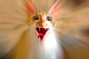 Воспаление желудка у кошки лечение симптомы thumbnail