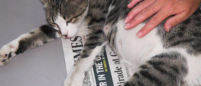 Токсикоз у кошек все симптомы
